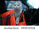 Stock photo pet carrier with cute cat in car 594915518