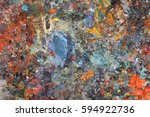 the texture color palette with... | Shutterstock . vector #594922736