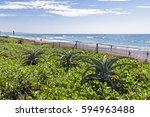 dune vegetation and aloe plants ... | Shutterstock . vector #594963488