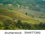 wonderful rice terraces in the... | Shutterstock . vector #594977390