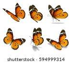 beautiful six monarch butterfly ... | Shutterstock . vector #594999314