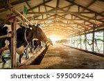 Dairy Cows In A Farm