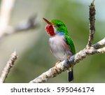 cuban tody | Shutterstock . vector #595046174