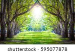 tunnel magic  forest green | Shutterstock . vector #595077878