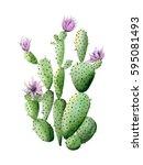 Flowering Cactus. Watercolor...