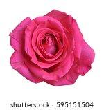 rose isolate on white... | Shutterstock . vector #595151504