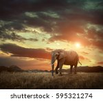 elephant with trunks and big... | Shutterstock . vector #595321274