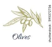 olive branch sketch. olive tree ... | Shutterstock .eps vector #595372736