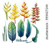 Watercolor Heliconia Collectio...