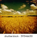 Field Of Wheat  Vintage Photo