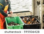 Live Lobsters Caught In Boxes...