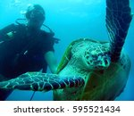 diving turtle and diver...   Shutterstock . vector #595521434