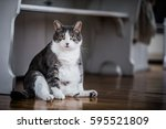 Funny Fat Cat Sitting In The...