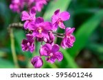 beautiful purple orchids | Shutterstock . vector #595601246