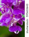 wet flower | Shutterstock . vector #595633643