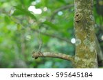 tree branches | Shutterstock . vector #595645184