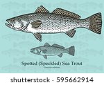 spotted sea trout  speckled sea ... | Shutterstock .eps vector #595662914