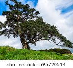 One Beautiful Tree  Standing...
