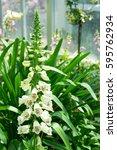 Dainty Tall Flower Spike Of...