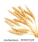 Golden Wheat Isolated On White...