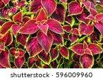 Nature Texture Plant Flora...