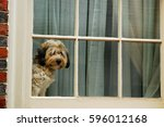 a cute dog waits and waits for... | Shutterstock . vector #596012168