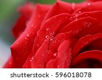 beautiful rose with drops | Shutterstock . vector #596018078