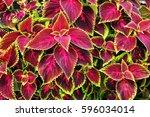 Plant Texture Structure Leaves...