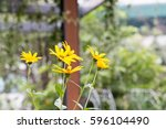 Group Of Yellow Flower With...