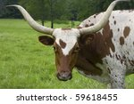 Brown And White Cow With Huge...