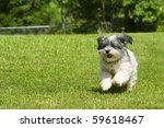 Cute fluffy white dog running in yard - stock photo