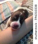 puppy sleep | Shutterstock . vector #596310338