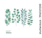 eucalyptus leaf collection.... | Shutterstock . vector #596319200