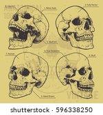 anatomical skulls vector set.... | Shutterstock .eps vector #596338250
