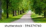 linden alley in summer | Shutterstock . vector #596374760
