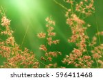 beautiful natural wild  flowers ... | Shutterstock . vector #596411468