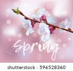 Spring. Flowering Branch Of A...
