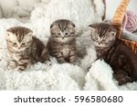 Stock photo cute kittens on fluffy plaid at home 596580680