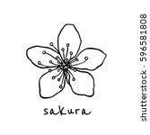 vector hand drawn sakura flower.... | Shutterstock .eps vector #596581808
