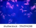 medusa | Shutterstock . vector #596594288