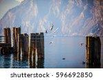 seagulls flying over mooring... | Shutterstock . vector #596692850