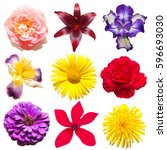 beautiful collection of flowers ... | Shutterstock . vector #596693030