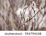 spring | Shutterstock . vector #596794148
