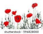 Red Poppies  Common Poppy  Cor...