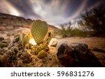 Tiny Cactus In The Desert