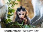 Beautiful Macaque Baby...