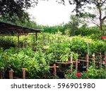 street side fruit trees shop in ... | Shutterstock . vector #596901980