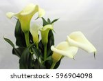 Calla Lily Flowers On A White...