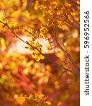 blurry. yellow flowers at night. | Shutterstock . vector #596952566