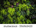 plant wall with lush green... | Shutterstock . vector #596963420